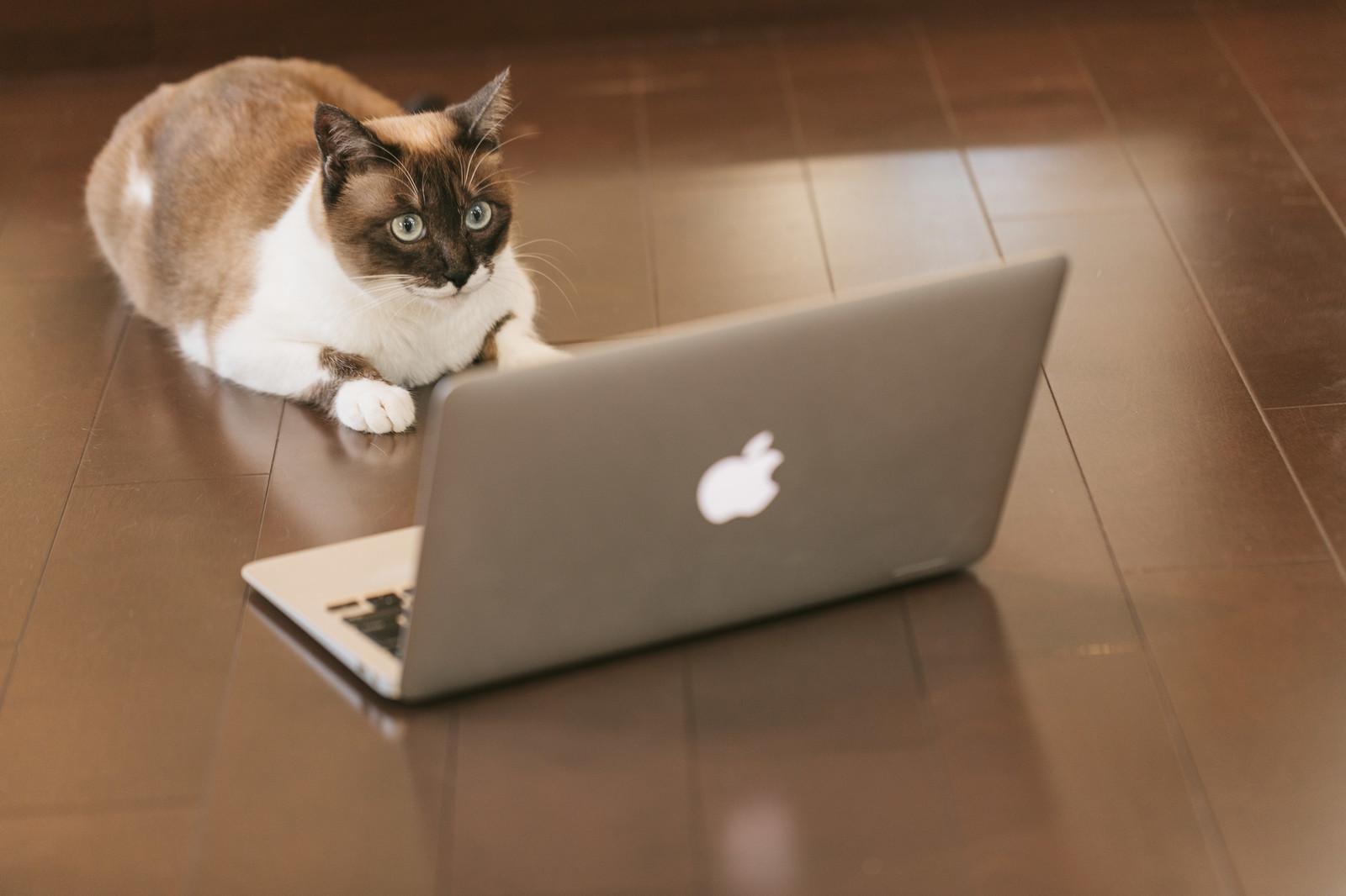 【初心者向け】MacでPHPを使う時の開発環境の作り方【MAMP】